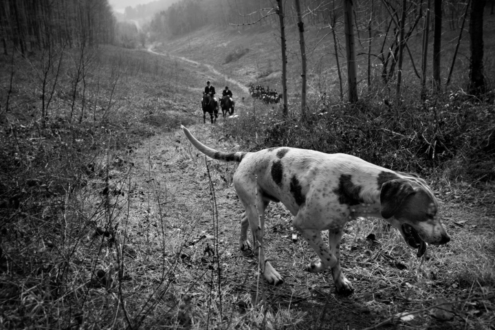 Hound Climbing valley in Charlton Woods