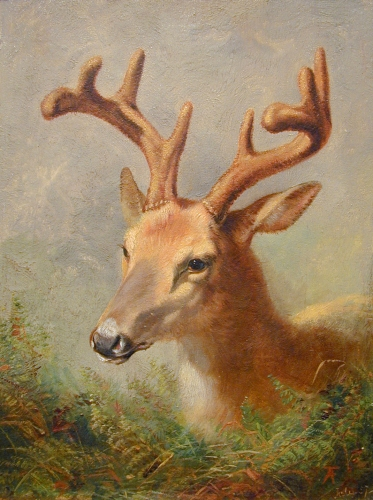 Arthur Fitzwilliam Tait (American, 1819 - 1905) American Deer, 1857 oil on canvas, 7 ⅛ x 5 ⅝ inches Gift of Dr. and Mrs. Timothy Greenan, 2011