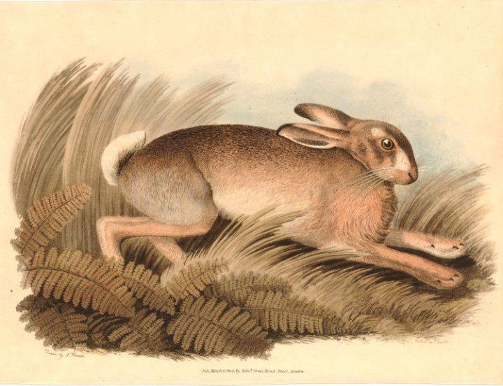 british-museum-howitt-hare-1917-1208-3170