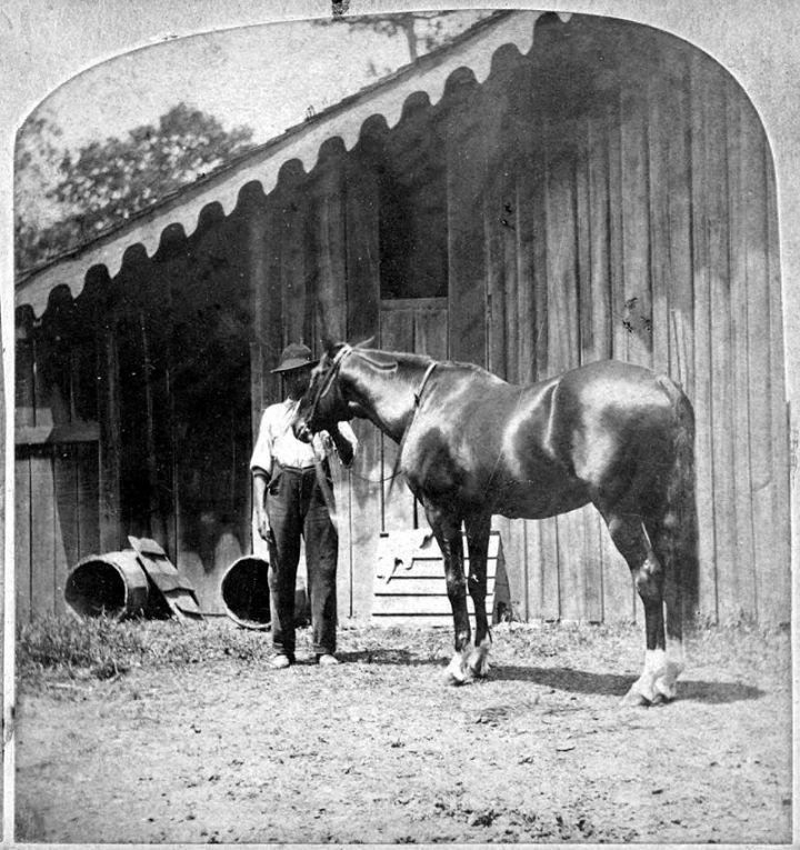 lexington_horse_mullen