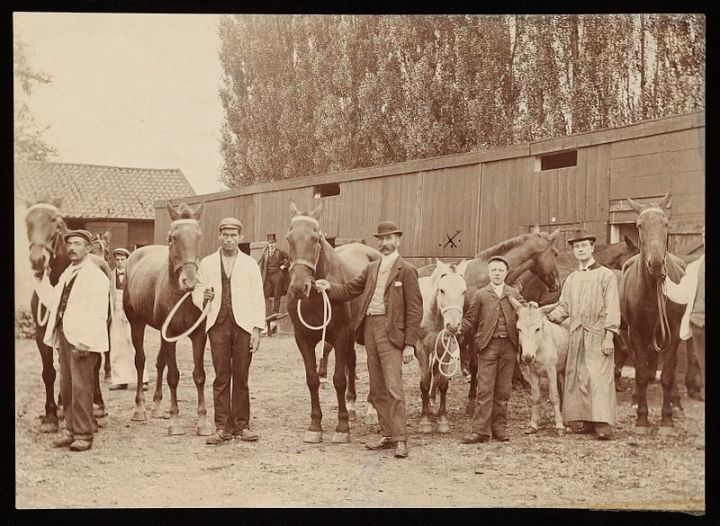 Horses_used_in_serum_production_Wellcome_L0051725