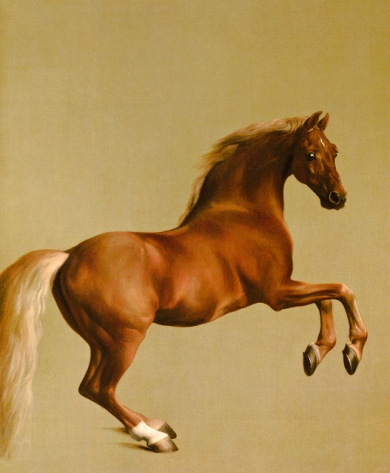 George Stubbs - Whistlejacket, 1762 at the National Gallery London England